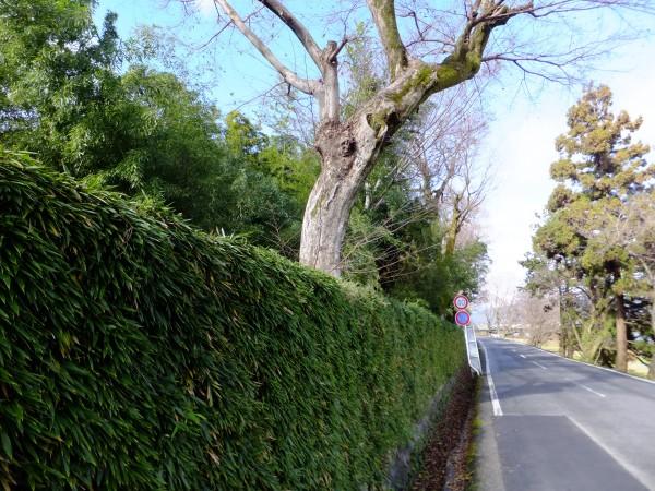 桂離宮の周りを散歩した。