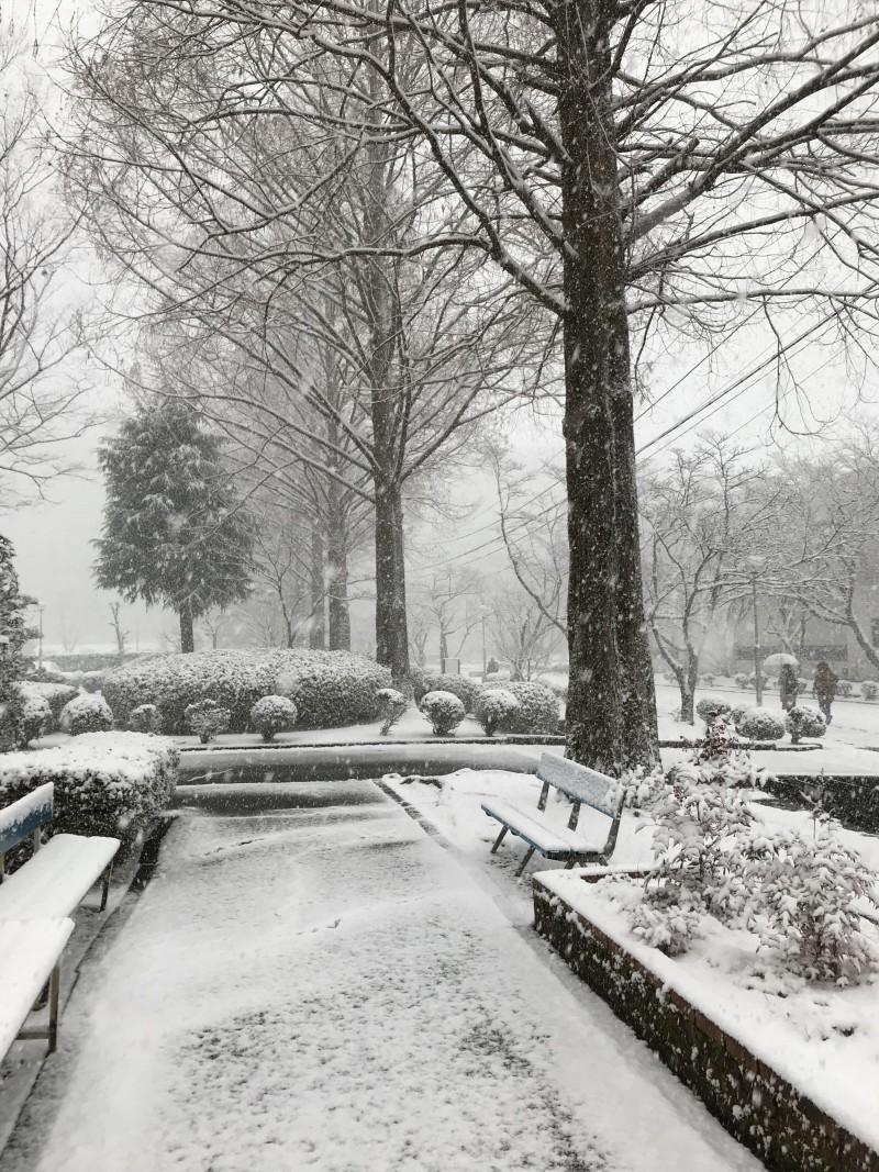 雪が降ってきた。