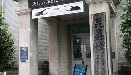 名和昆虫博物館に行く