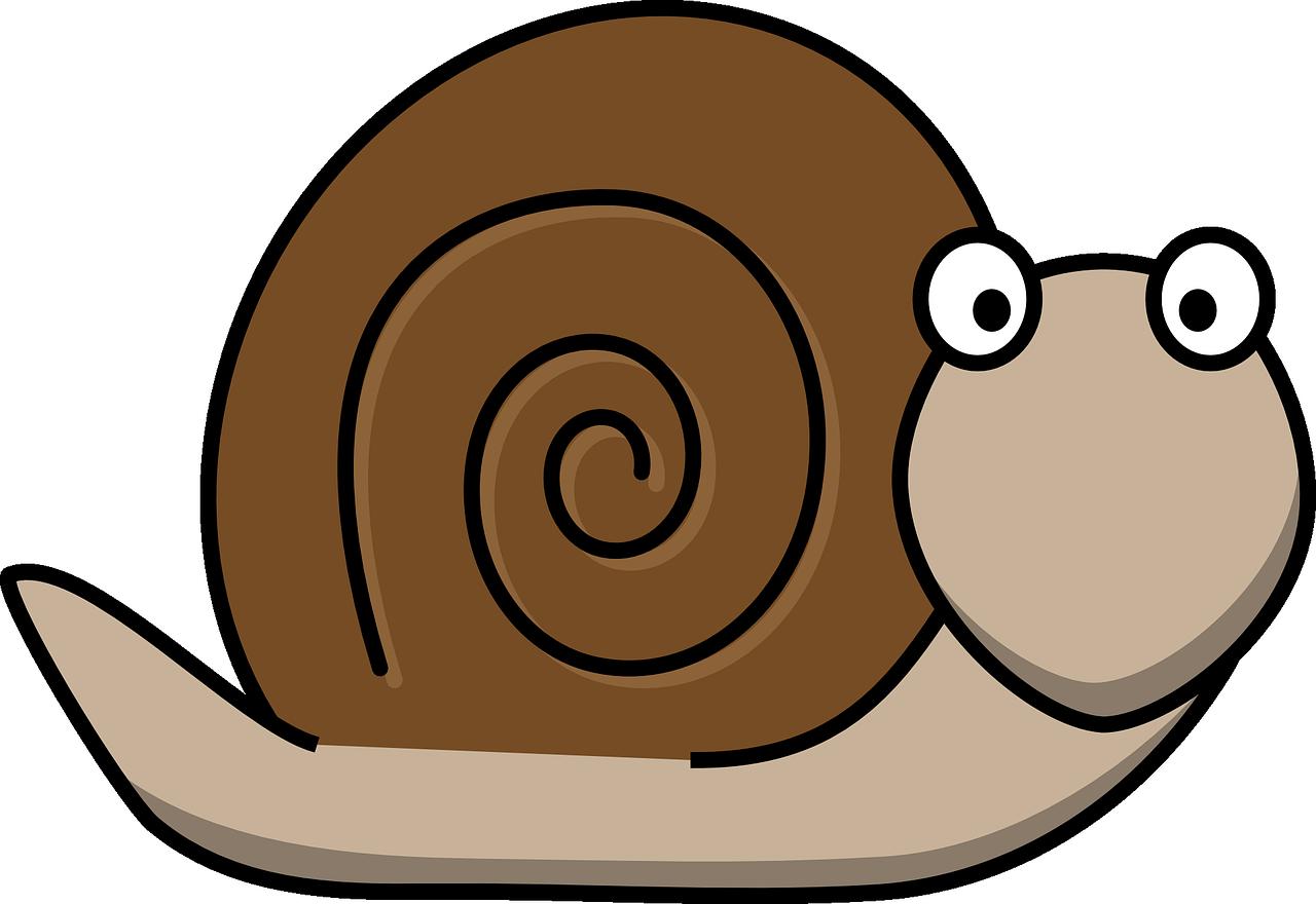 カタツムリの交尾