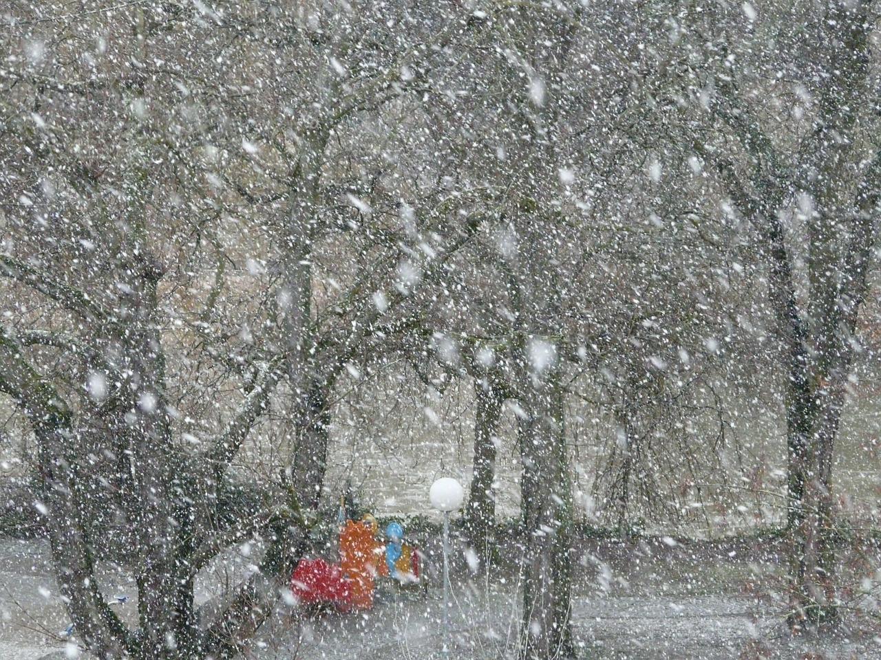 今日は朝、雪が降っていた。初雪かな。